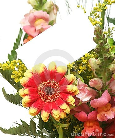 Free Card And Flowers Royalty Free Stock Photography - 5210067