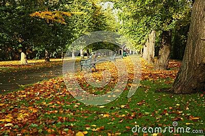 Cardiff park