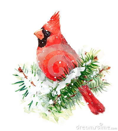 Free Cardinal Bird Watercolor Winter Christmas Illustration Hand Painted Royalty Free Stock Photo - 63484405