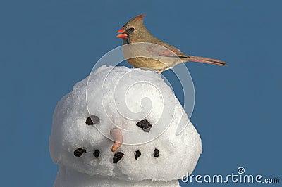 Cardinal On Snowman