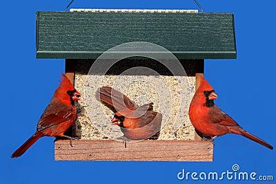 Cardinals on a Feeder