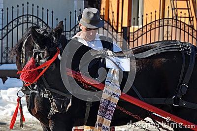 Care horses Editorial Image
