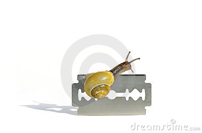 Careful snail