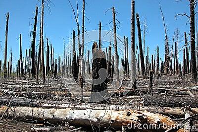 Careless forest fire
