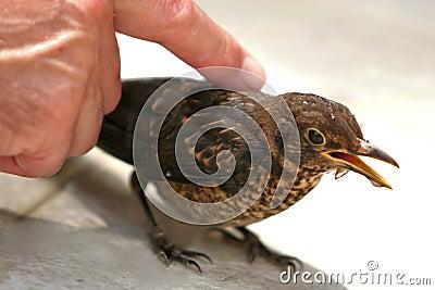 Caressing a bird