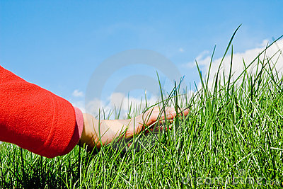 Caressing the grass