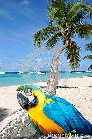 Free Caribbean Beach Stock Image - 14805801