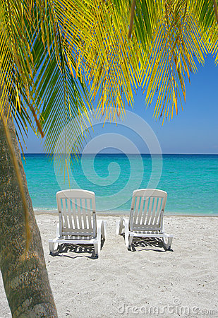 Caribbean beach chairs and palm