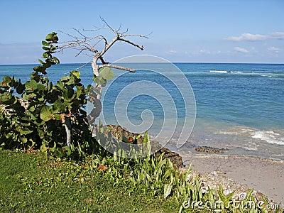 Caribbean beach landscape