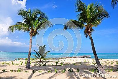 Caribbean Beach, Mexico
