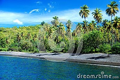 Caribbean beach with palm tree