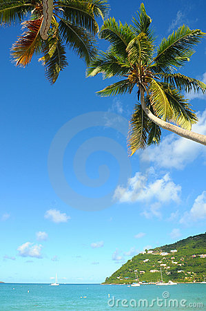 Caribbean beach with palm tree