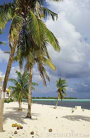 Caribbean Beach with Palm Trees and Coconuts