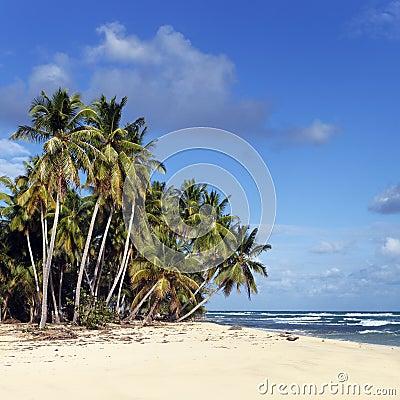 Caribbean beach square