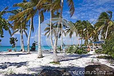 Caribbean beach with white sand