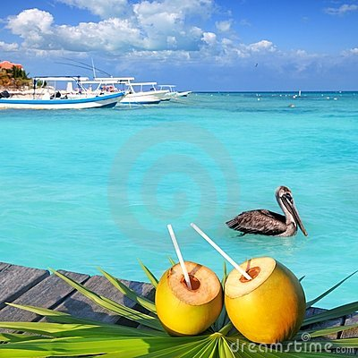 Caribbean fresh coconuts cocktail pelican swimming