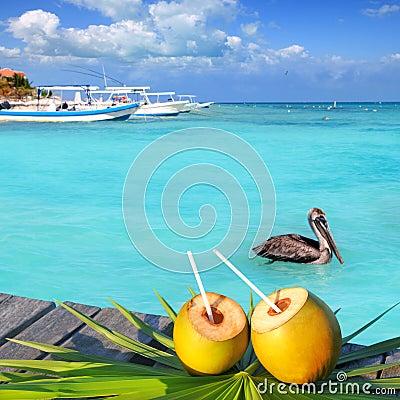 Caribbean fresh coconuts cocktail pelican swimming