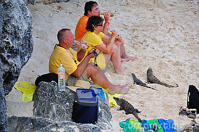 Caribbean Iguanas and Tourists, Mexico Editorial Photo