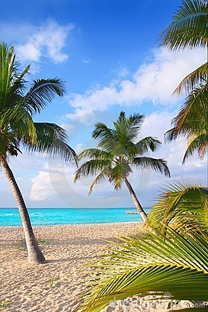 Caribbean North beach palm trees in Mexico