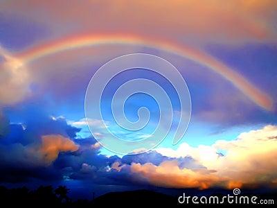 Caribbean Rainbow