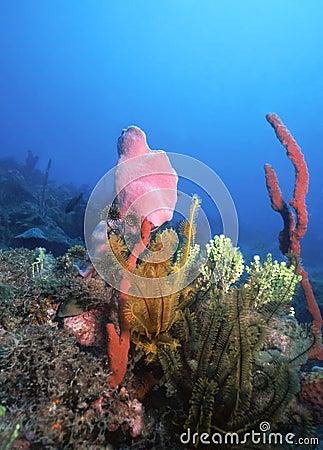 Free Caribbean Reef Royalty Free Stock Image - 256206