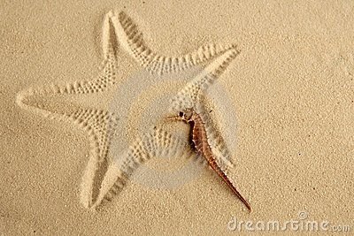 Caribbean sand seahorse over starfish footprint