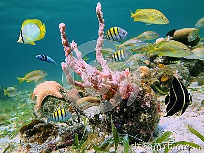 Caribbean sea life