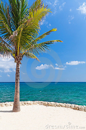 Caribbean sea with lonely palm tree