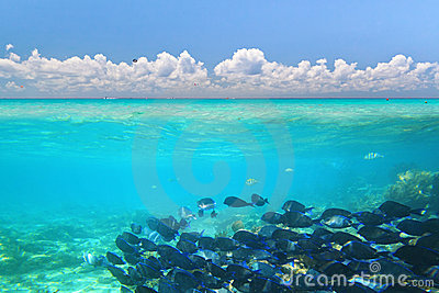 Caribbean Sea under blue sky