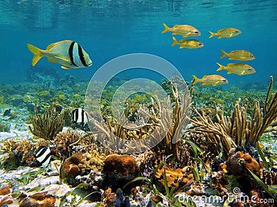 Caribbean sea wildlife