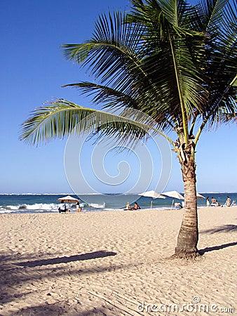 Caribbean Tropical Paradise