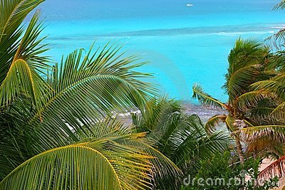 Caribbean turquoise sea coconut palm trees