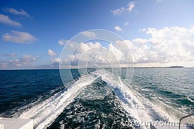 Caribbean Wake