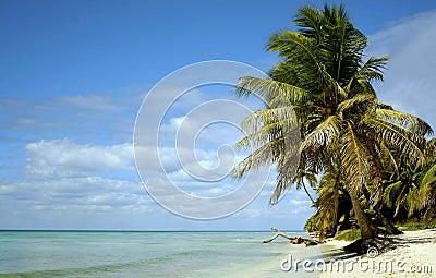 Caribean paradis