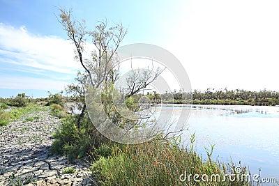 Carmargue marshland