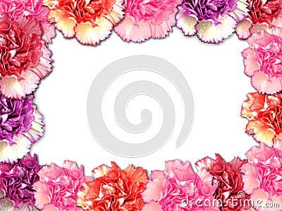 carnation border stock images image 4883624