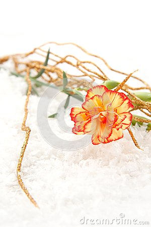 Carnation on the snow