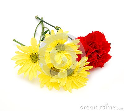 Free Carnations And Daisy Flower Royalty Free Stock Photos - 25140298