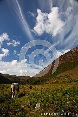 Carneddau Snowdonia