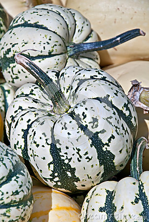 Carnival Squash Striped Green and White