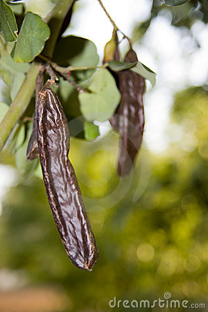 Free Carob Royalty Free Stock Images - 6346109