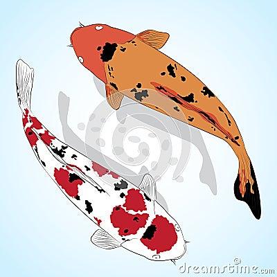 Carp. Koi Fish