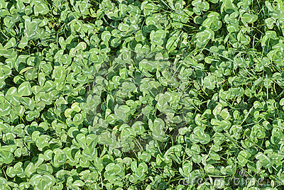 Carpet from green leaves.