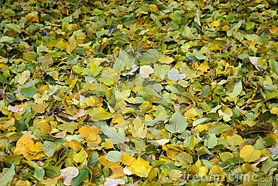 Carpet of Green and Yellow Autumn Leaves