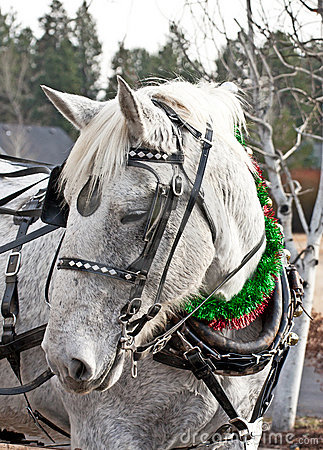 Carriage Horse in Holiday Parade