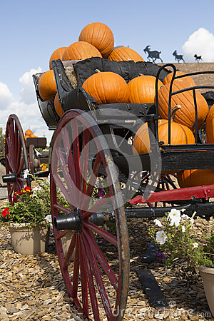 Carriage loaded with pumpkins