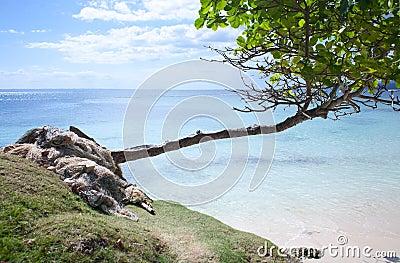 Carribean Paradise