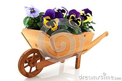 Carriola di legno con i pansies immagini stock libere da diritti immagine 13565889 - Carriola in legno da giardino ...