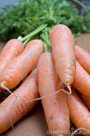 Carrot forefront
