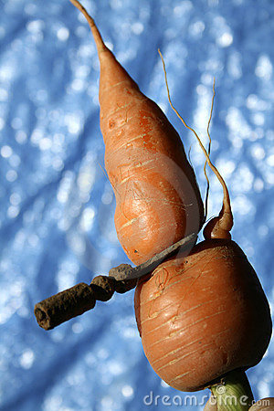 Carrot Grows Through a Key